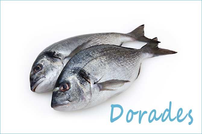 Dorade-Fotolia_73428624