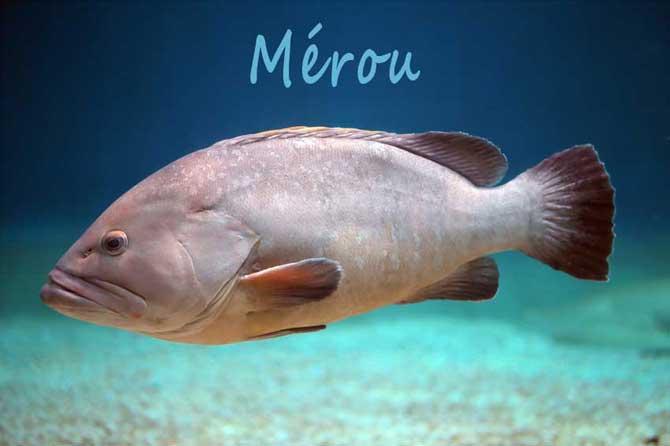 Mérou-Fotolia_112502764