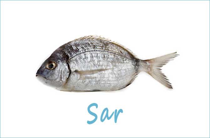 Sar-Fotolia_40423137