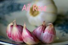 Ail_Rose_bis-Fotolia_217453