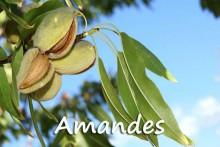 Amandes-7_Fotolia_16845883