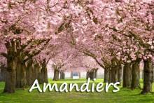 Amandier-7-Fotolia_62297105