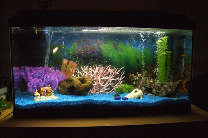 pissons en aquarium en provence provence 7