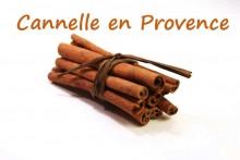 Cannelle_1-Fotolia_4449502