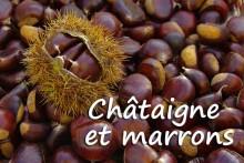 Châtaigne-Fotolia_72148816
