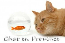 chat-en-provence