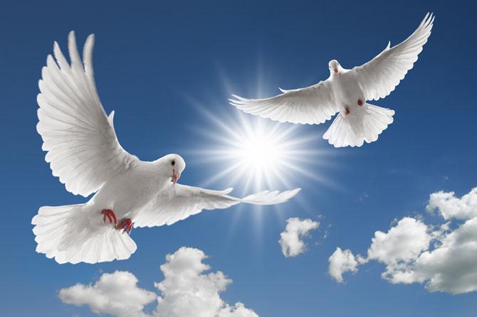 В небо Йошкар-Олы взмоют белые голуби - Новости Йошкар-Олы и Республики Марий Эл