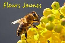 Fleurs-Jaunes-1-_Fotolia_28