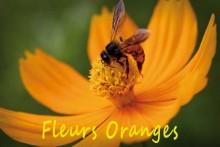 Fleurs-oranges-1.-iStock_00