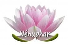 Nenuphar_2-Fotolia_8623748