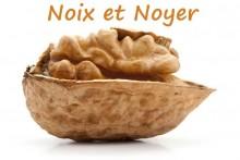 Noix_7-Fotolia_18387186