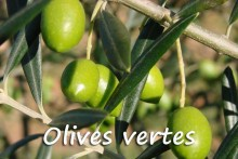 Olive_Verte-7-Fotolia