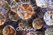 Oursins-1B