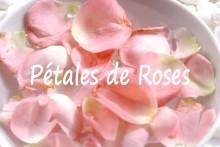 Pétales-de-Roses-2_Fotolia_