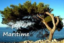 Pin-Maritime-1-Fotolia