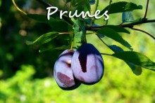 Prunes=Fotolia_4011761