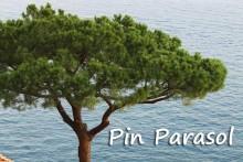 Pin_Parasol_7_-Fotolia_373