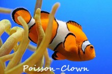 Poisson-Clown-2
