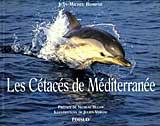 les-cetaces-de-mediterranee