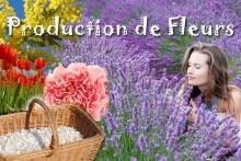Production-Fleurs-Provence