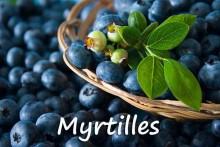Myrtilles---Fotolia