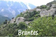 Brantes-1B--Verlinden