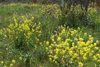 Parc-des-7-Collines-Fleurs