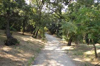 Parc-des-7-Collines-Montee-