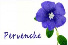 Pervenche-2_Fotolia_2297587
