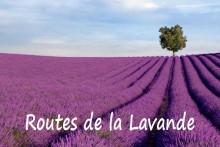 Route-de-la-lavande_Lavande