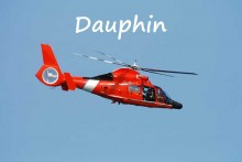 Dauphin-Fotolia_3340741_S