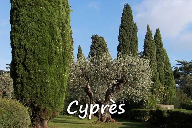 cypr s en provence provence 7. Black Bedroom Furniture Sets. Home Design Ideas