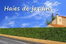 Haie-de-Lauriers