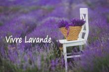 Vivre-Lavande-Fotolia_80022