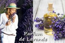 Parfum-de-Lavande-1-Fotolia