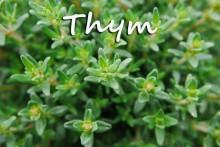 Thym-1-Fotolia_117267430