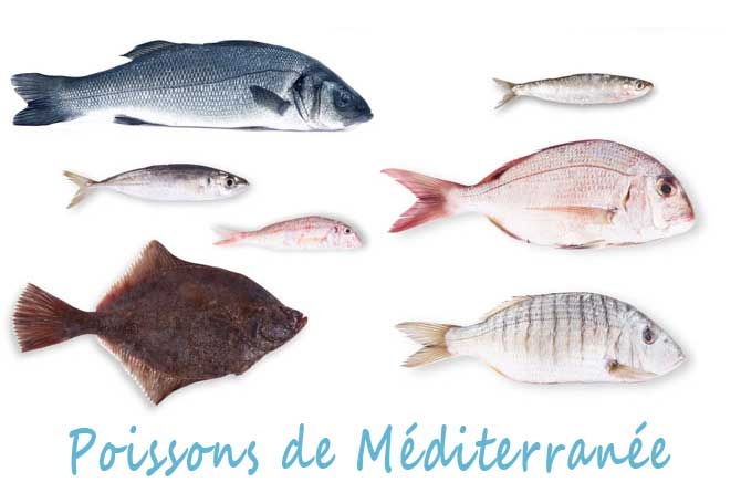 Poissons de mer m diterran e provence 7 for Nom poisson rouge