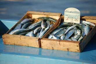 Sardines-2_Fotolia_11858481