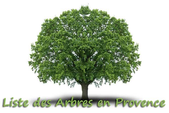 Extrêmement Liste des Arbres en Provence | Provence 7 DV11