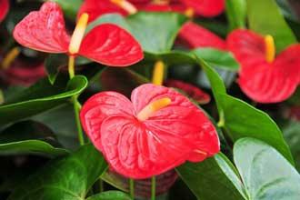 Fleurs-Rouges-4-Fotolia_874