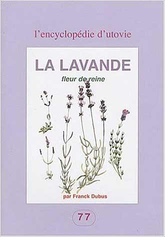 Lavande-fleur-de-Reine