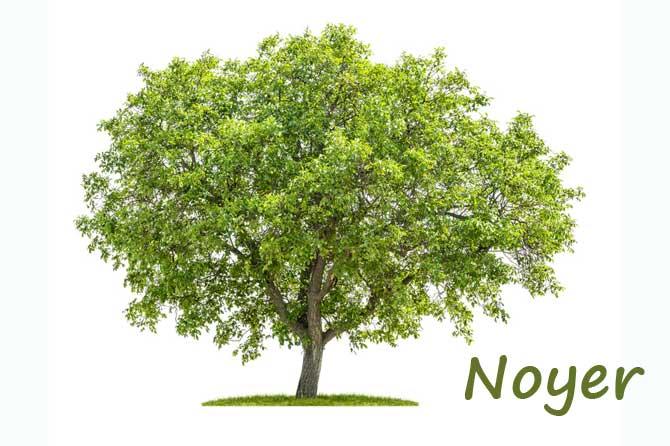 Noyer-Fotolia_83984940