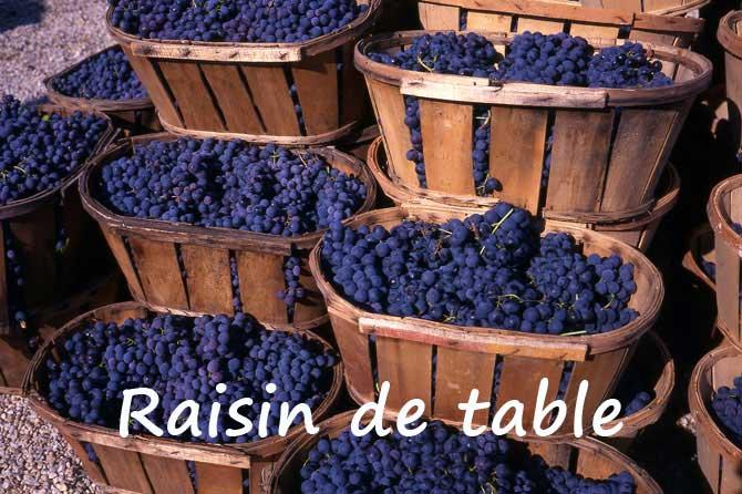 Raisins De Table En Provence Provence 7