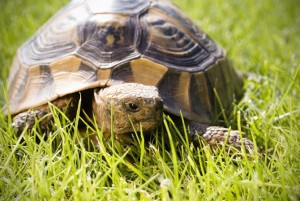 Tortues-iStock_000006938808