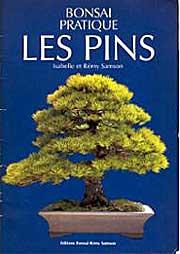 bonsai-pratique-les-pins