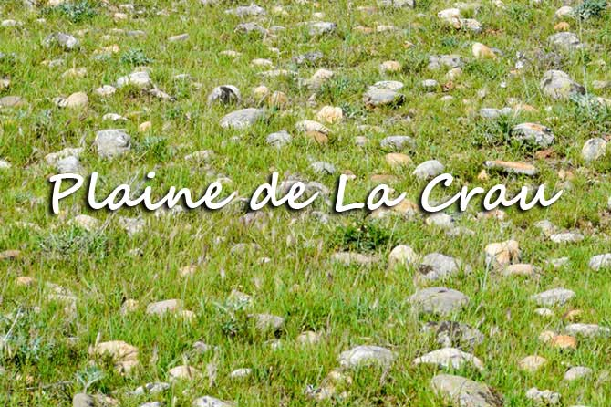 Plaine-de-La-Crau_Fotolia_2