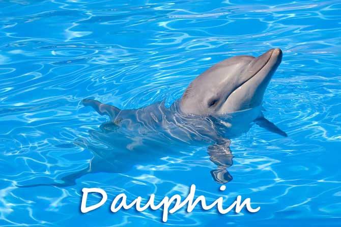 Dauphins en Provence | Provence 7