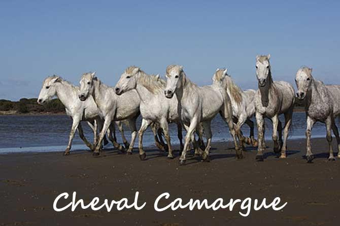 9d8f72d52c6 Cheval Camargue en Provence