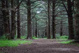 Cèdres-Forêt-Bonnieux-Fotol