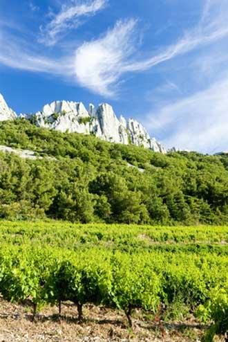 Gigondas-Vignes-Fotolia_636